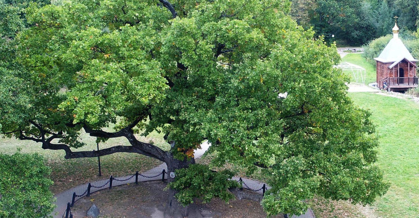Программа «Деревья — памятники живой природы»